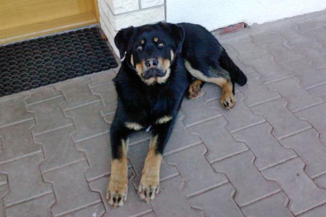 Ztracený pes Aron